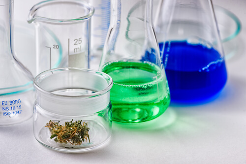 cannabinoid research