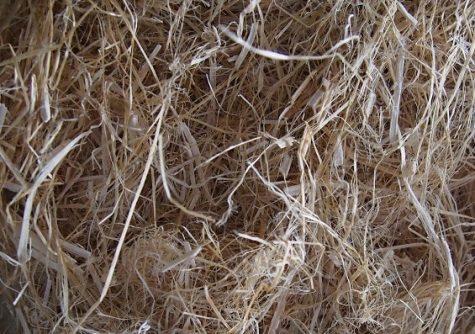 decorticated hemp fiber research