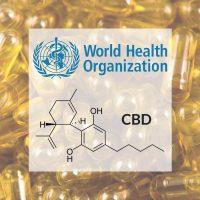 cbd hemp oil pros and cons